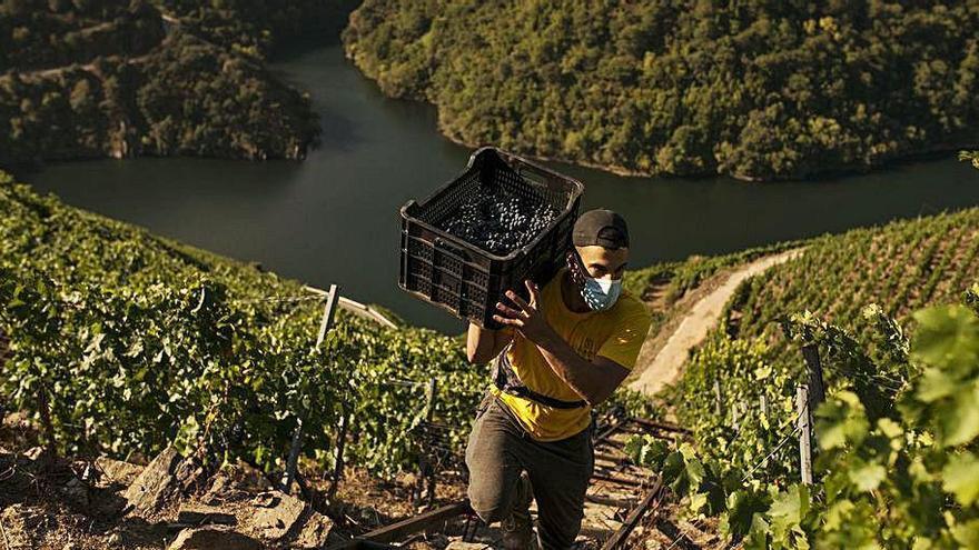 La Ribeira Sacra, incluida en un plan del Gobierno como destino turístico sostenible