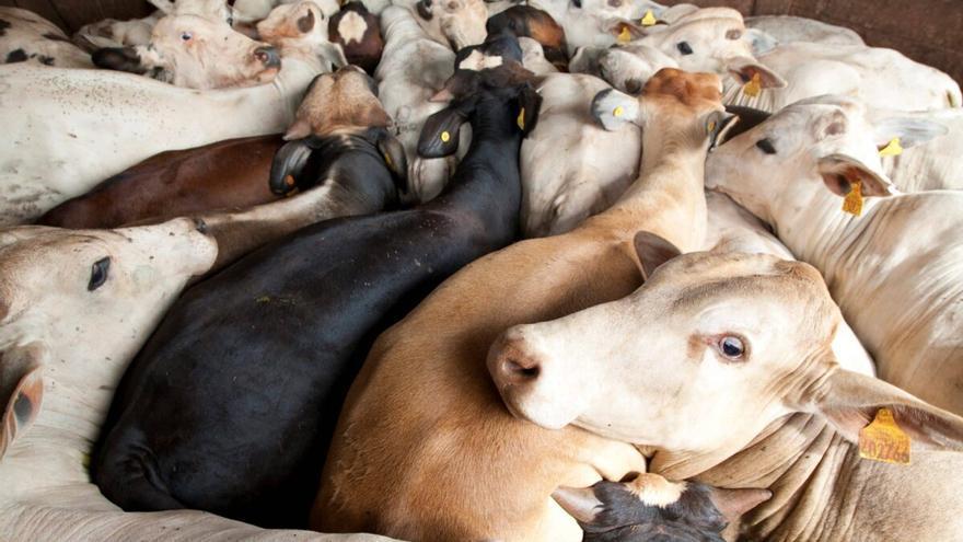 El negocio de la carne: 910 millones de animales sacrificados en España en 2020