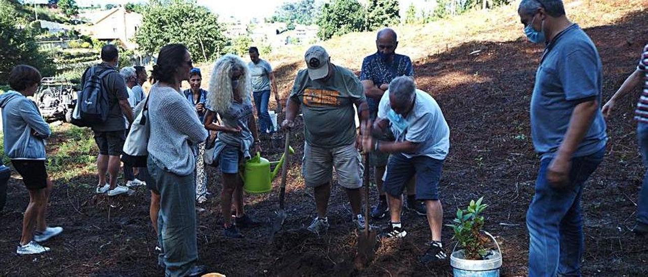 El grupo de turistas de Ecowildlife con  los comuneros en Monte Pequeno, en  Arcade de Riba. Abajo, los viajeros  plantan unos castaños.     // FDV