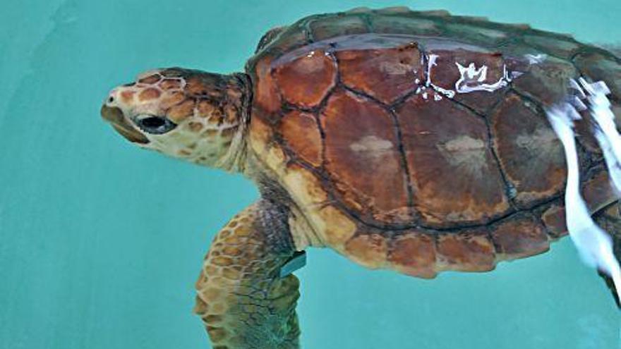 """TV-Tipp """"Terra X"""": Mehr über Meeresschildkröten erfahren"""