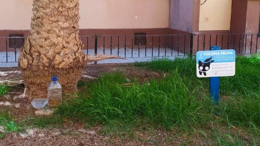 El voluntariado esteriliza 67 felinos de colonias de Alboraia