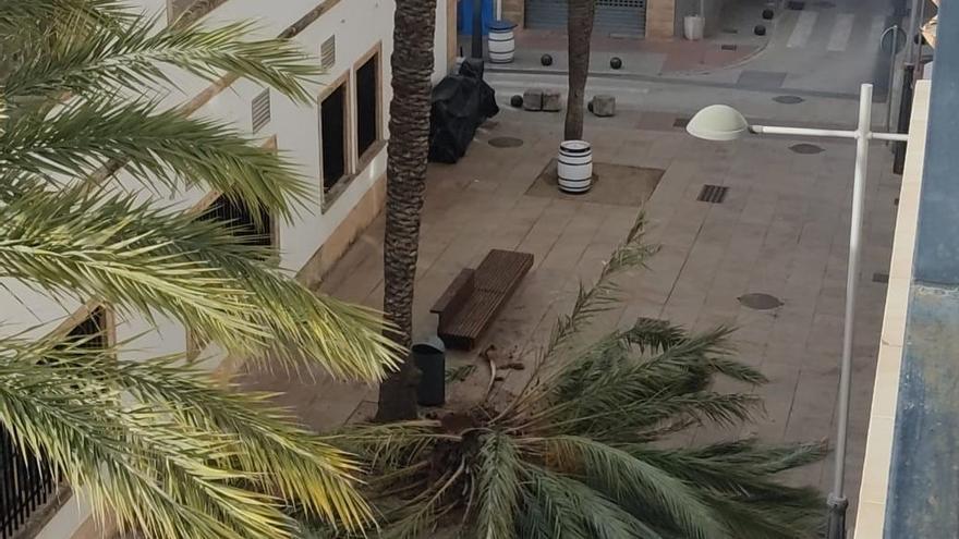 Un susto en Xábia como la copa de... una palmera