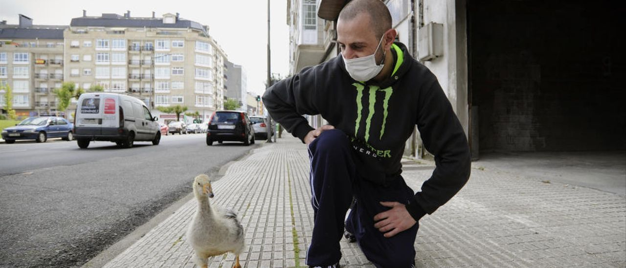 El paseo diario de Pipi, el pato estradense que ya es un vecino más