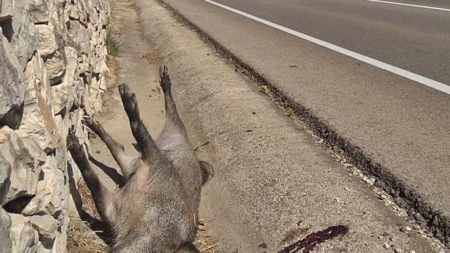 Bajan los atropellos de fauna en una carretera del Montgó al reducir la velocidad a 50 km/h