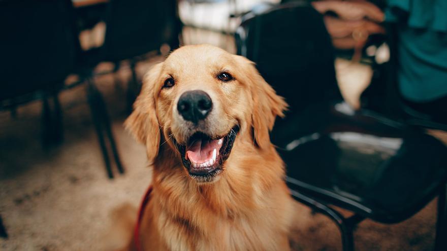 DNI en mascotas: los perros y gatos domésticos tendrán que tener esta identificación el año que viene