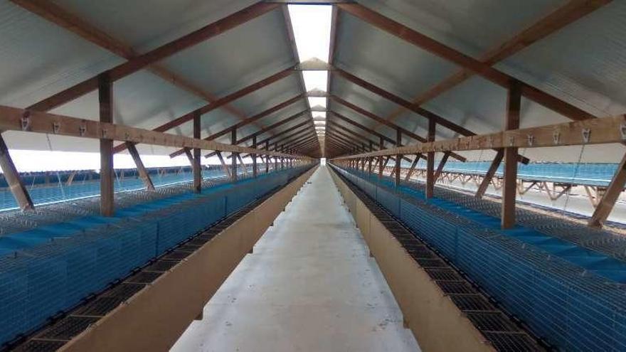 La granja de visones acogerá en cuatro naves 4.000 madres