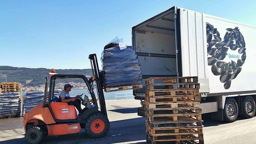 Los bateeiros inician su exportación a Italia con apenas 22 toneladas diarias de mejillón