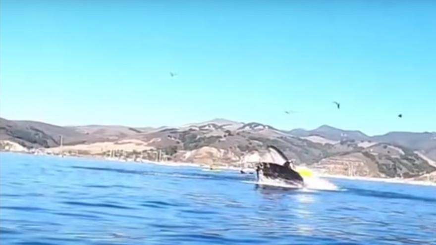 El increíble vídeo de dos kayakistas a punto de ser tragadas por una ballena