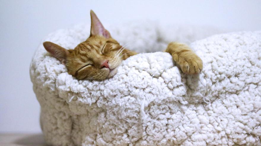 La técnica para dormirse en solo dos minutos que utilizan los militares de élite