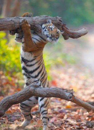 fotos-divertidas-animales-1111111.jpg