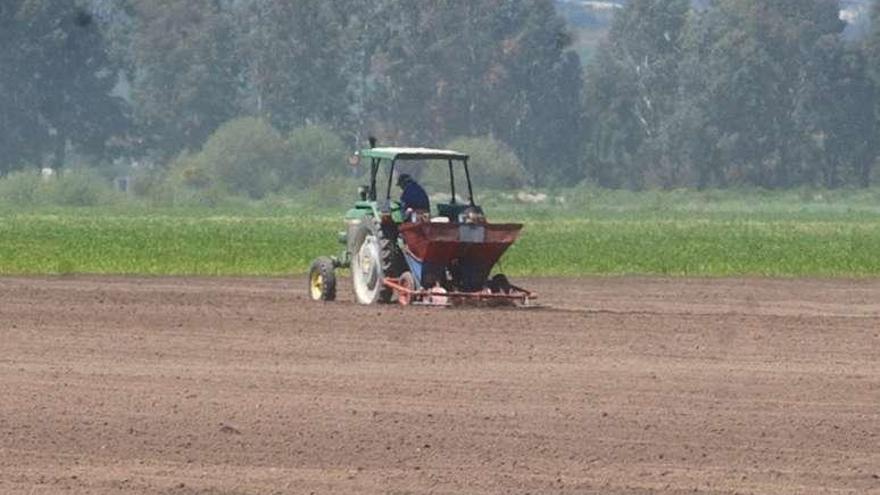 Las lluvias mermarán hasta un 30% la producción de patata y su facturación