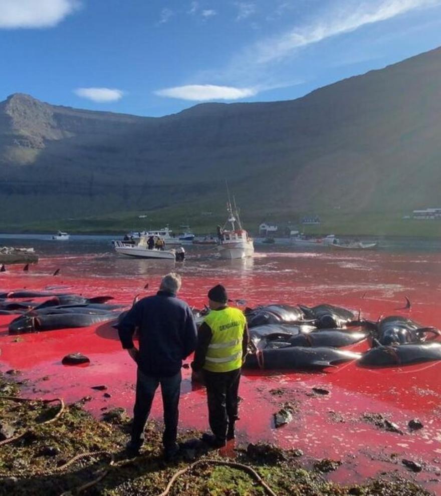 Los 1.428 delfines muertos en un día en islas Feroe: ¿Tradición o masacre?
