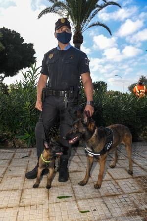 Reestructuración de la Policía Local de Maspalomas