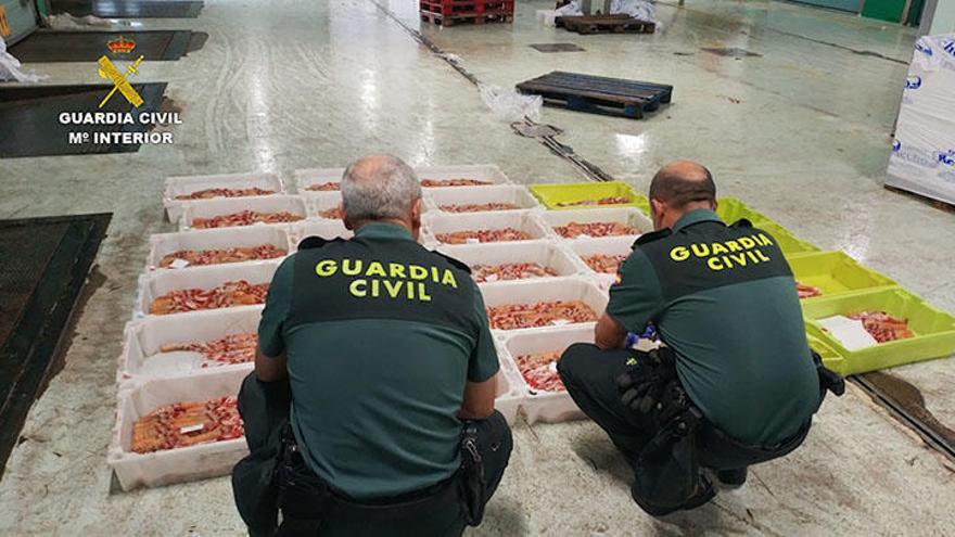 Intervenidas en A Coruña 45 toneladas de cigalas