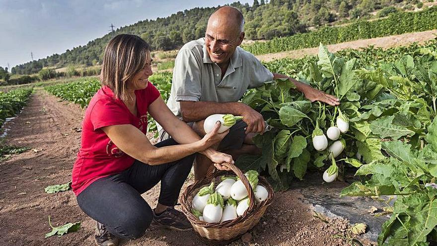 Sant Fruitós regala planter per recuperar el cultiu d'albergínia