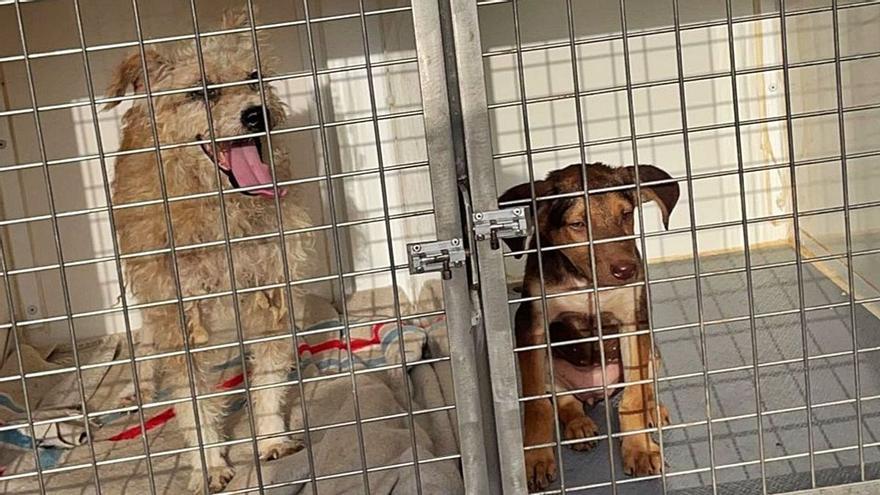 Intervenidos 28 perros que se encontraban en pésimas condiciones higiénico-sanitarias