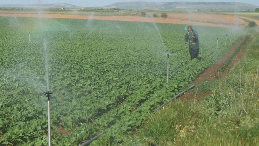 Agua del canal Toro-Zamora riega una tierra de cultivo.