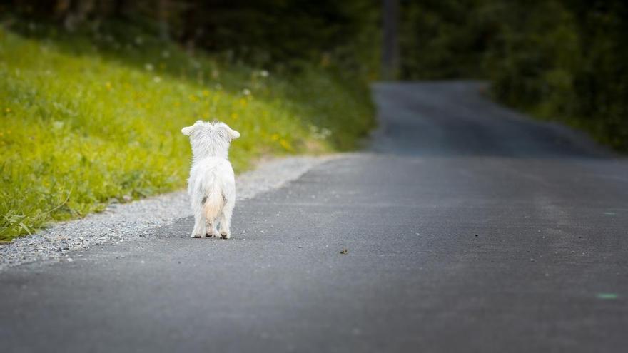 Libera cifra en más de 64.400 los animales abandonados en Galicia entre 2017 y 2019
