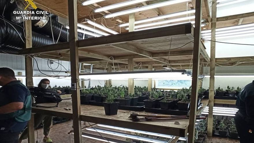 Descubren una plantación de marihuana en un chalé de Xàbia al no pagar el alquiler