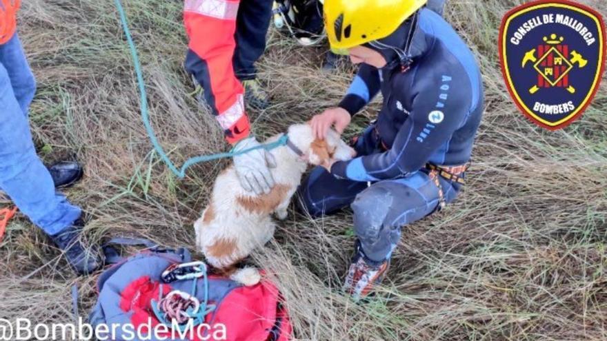 Feuerwehr rettet Hund vor dem Ertrinken aus Auto