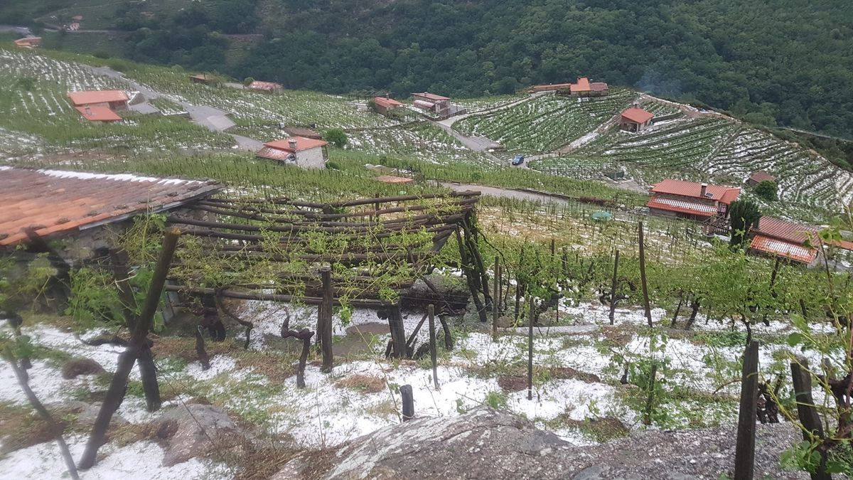 Granizo caído en los viñedos en Chantada.