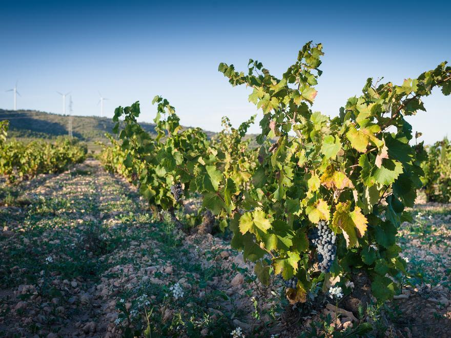 Bodegas BSI - Poniendo en valor el patrimonio vitivinícola