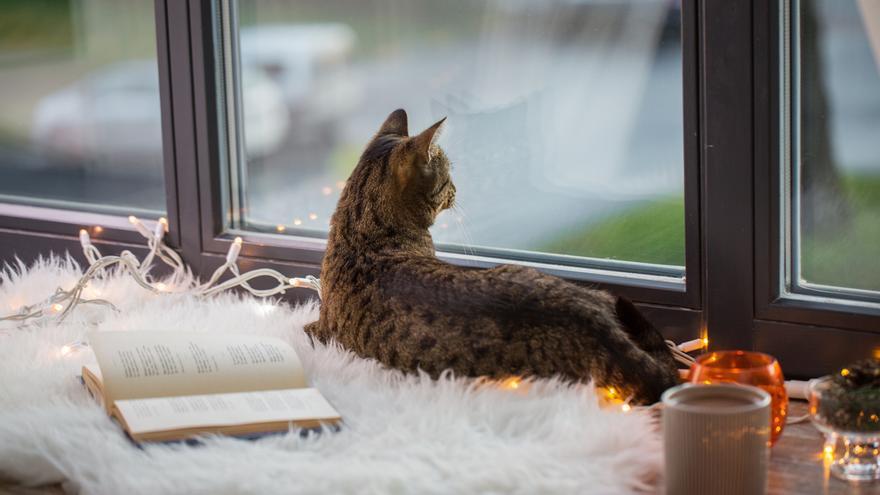 Los mejores remedios para evitar que tu gato se escape por la ventana