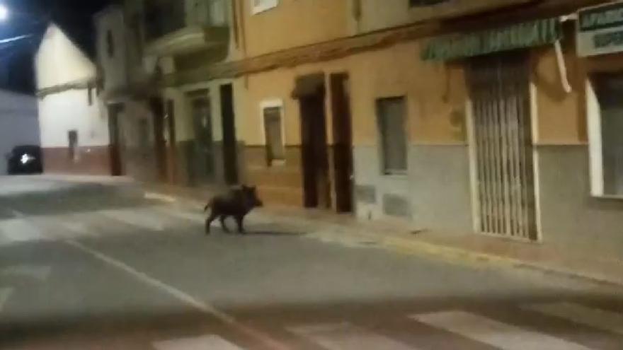 Un jabalí se pasea de noche por las calles de Anna