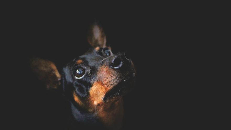 La desaparición de un perro enfrenta a una hostelera y a un jefe de Protección Civil