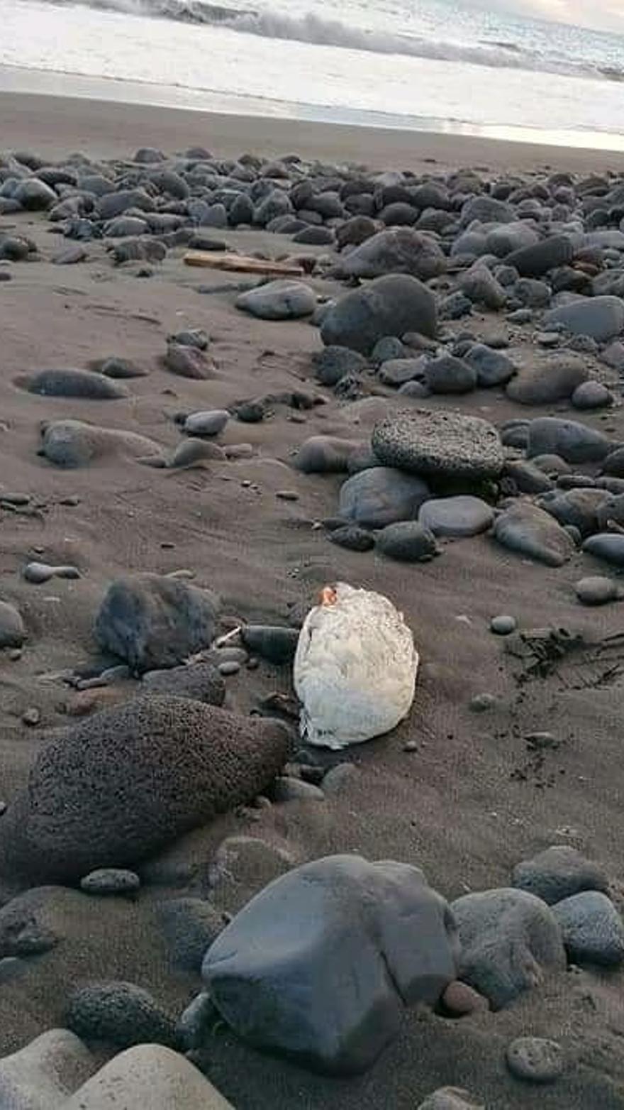 Hallan un pato decapitado en un playa de Güímar