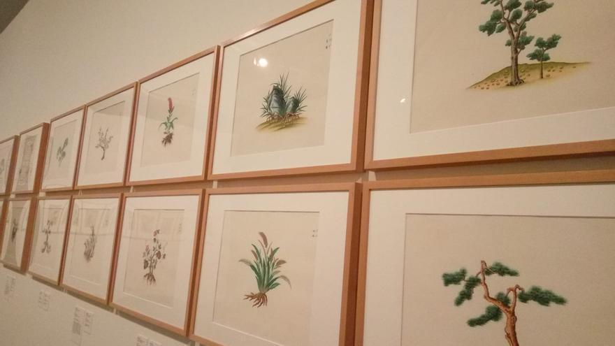 La colección de dibujos chinos de Balmis se muestra en el Jardín Botánico