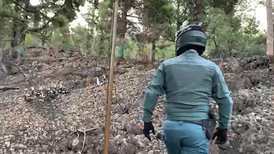 Intervención de la Guardis Civil en una granja de La Palma