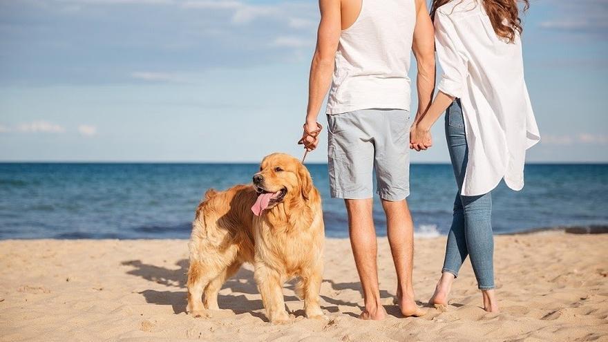 Síntomas del golpe de calor en perros y cómo combatirlo