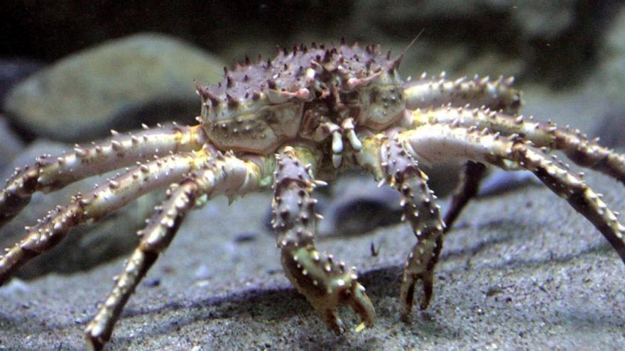 Un arrecife fósil en el Pirineo aragonés revela nuevas especies de cangrejos