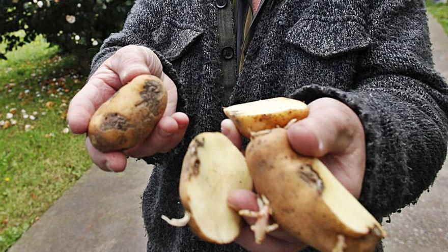 Las plagas destrozan el 20% de las cosechas y dejan pérdidas por más de 70 millones anuales