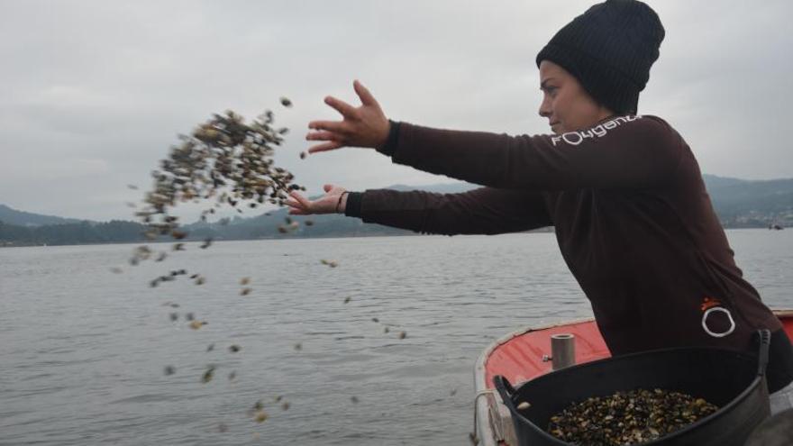 El sector del marisqueo siembra el fondo de la ría de Vigo con 3 millones de almejas