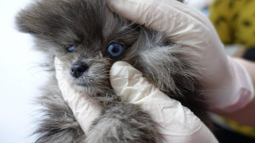Cadáveres de cachorros en un congelador y animales enfermos en una tienda de Barcelona
