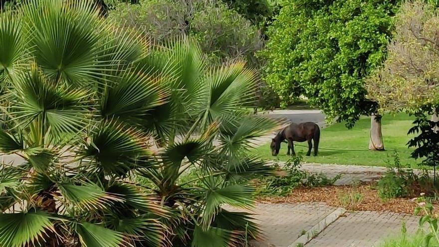 Un poni pasta en las zonas verdes del nuevo barrio de las Moreras