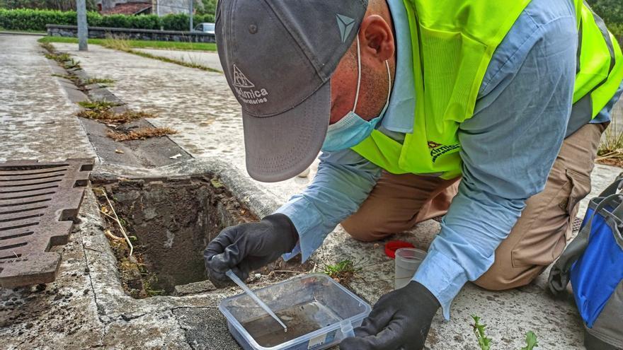 Lokímica: Control de plagas que prioriza la eficiencia y el respeto por el medio ambiente