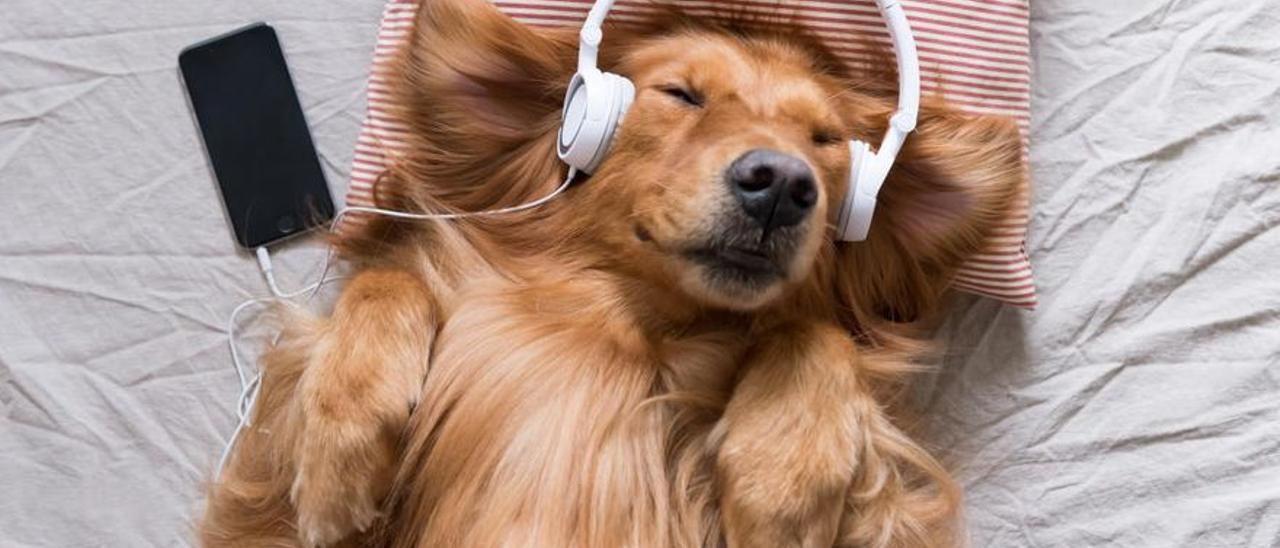 Esta es la música que, según la medicina veterinaria, puedes ponerle a tu mascota