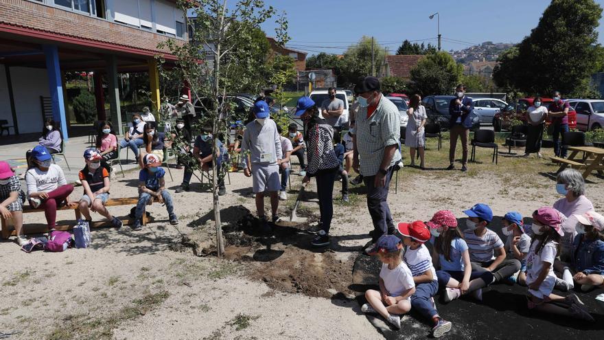 El vivero de un millar de árboles del colegio Valle-Inclán de Vigo, premiado en un certamen nacional