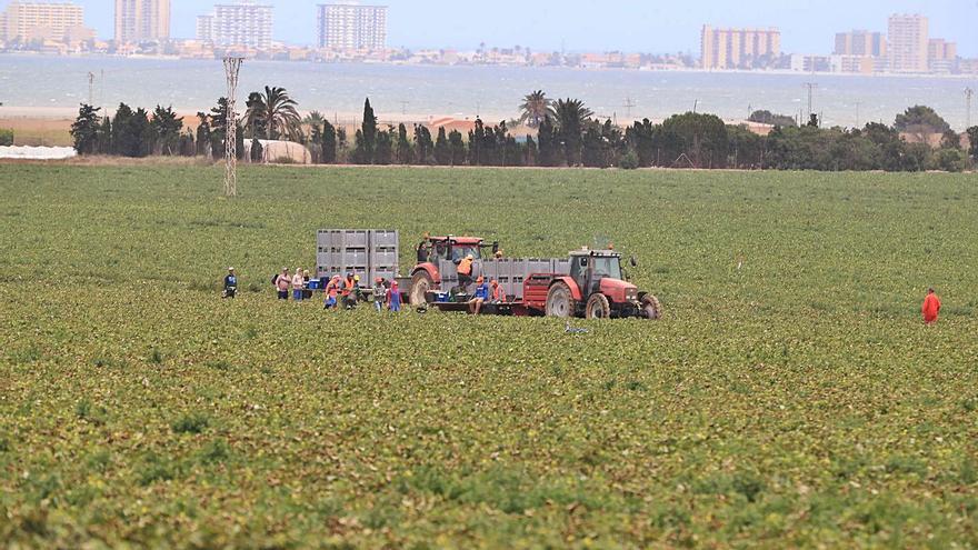 """Abascal exige derogar la Ley del Mar Menor, que """"acaba con la agricultura"""""""