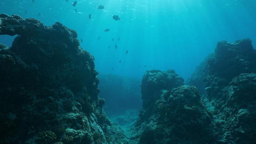 Un estudio revela que el fondo marino estuvo habitado por gusanos depredadores gigantes