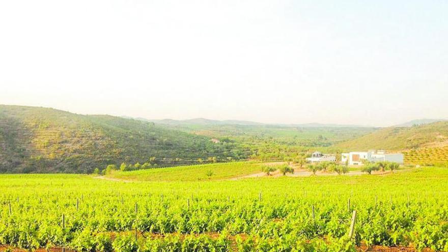 La IGP Castelló, en busca de la DO para proyectar sus vinos al exterior