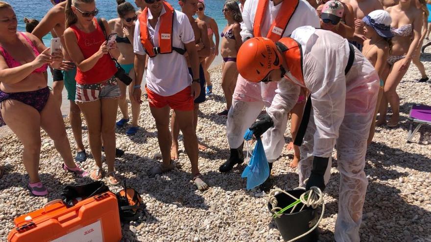 Extraen una carabela portuguesa en la cala del Moraig de Benitatxell