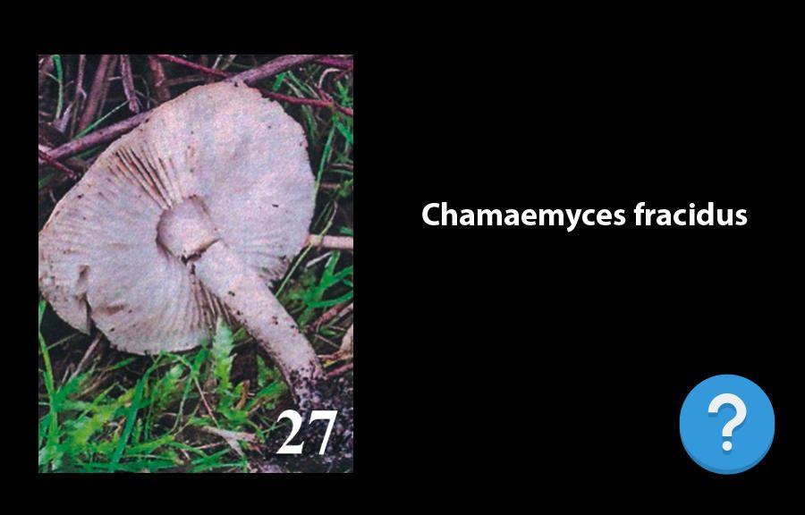 Novos fungos catalogados
