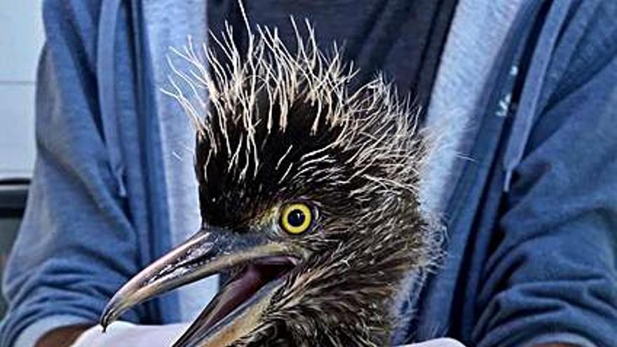 La llegada de nuevas aves abre una investigación sobre el calentamiento global