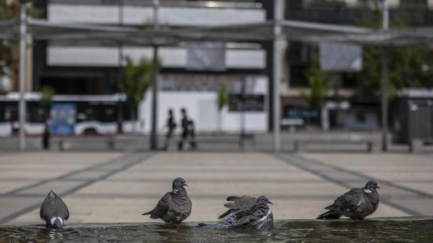 Palomas refrescándose en la fuente de La Marina en una imagen de archivo.