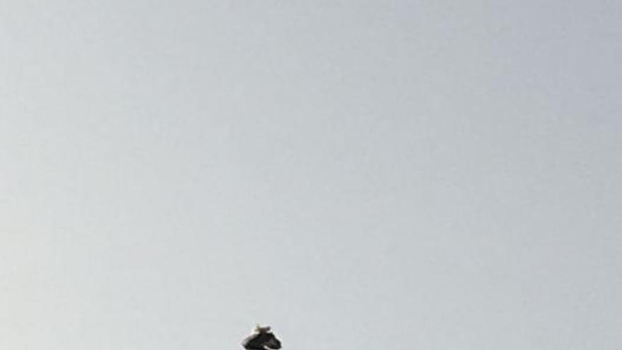 Una cigüeña 'veranea' en la estatua de Colón en Maspalomas