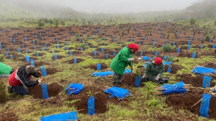Foresta ofrece 20 empleos verdes